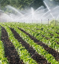 Sprinkling Irrigation-of-vegetables